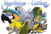 Vogelbörse Cottbus